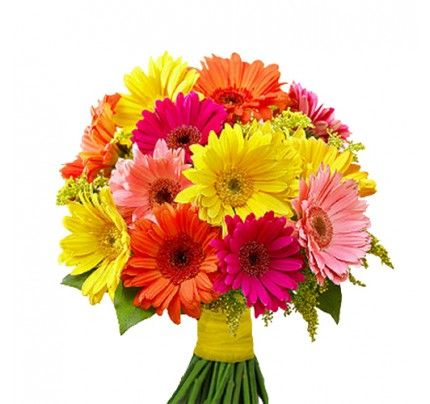 Order Gerbera Flowers Online Send Gerberas Flowers In India With Same Day And Midnight Delivery Bonsai Plants For Sale Flowers Online Flowers