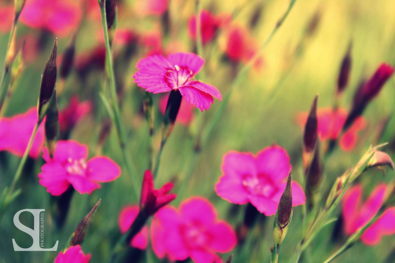 Sommergefühle - Pinke Blumen