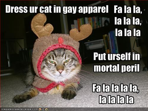 LOLCat: Dress ur cat in gay apparel. Put urself in mortal peril ...
