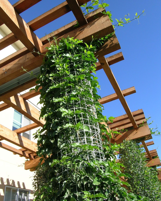 trellis, vines, green wall, climbing vines, columns Elements ...