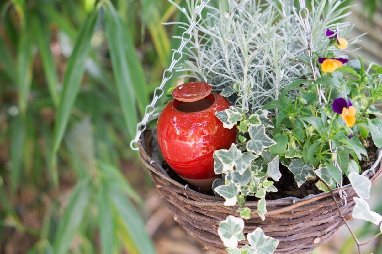 plantes en pot 10 solutions pour r duire l 39 arrosage la. Black Bedroom Furniture Sets. Home Design Ideas
