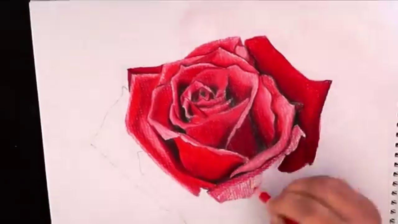 Drawing red rose with colored pencil - Faber castell polychromos ...