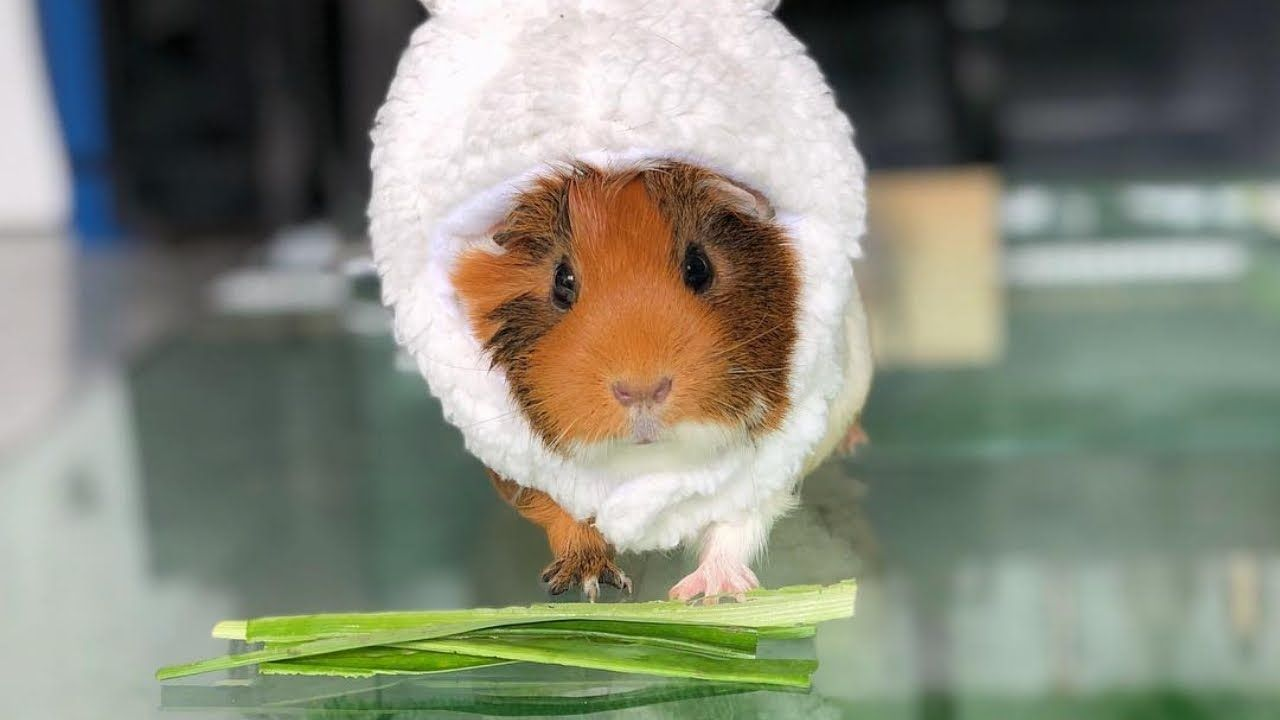 Pin On Funny And Cute Animals Videos