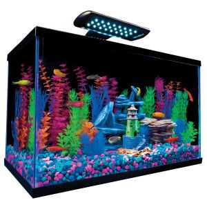 Glofish 10 gal aquarium kit petsmart feathers fur for 10 gallon fish tanks