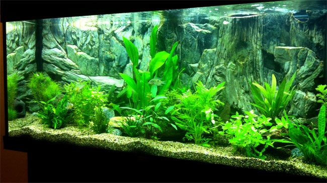Planted Aquarium With 3d Rock And Root Background Great