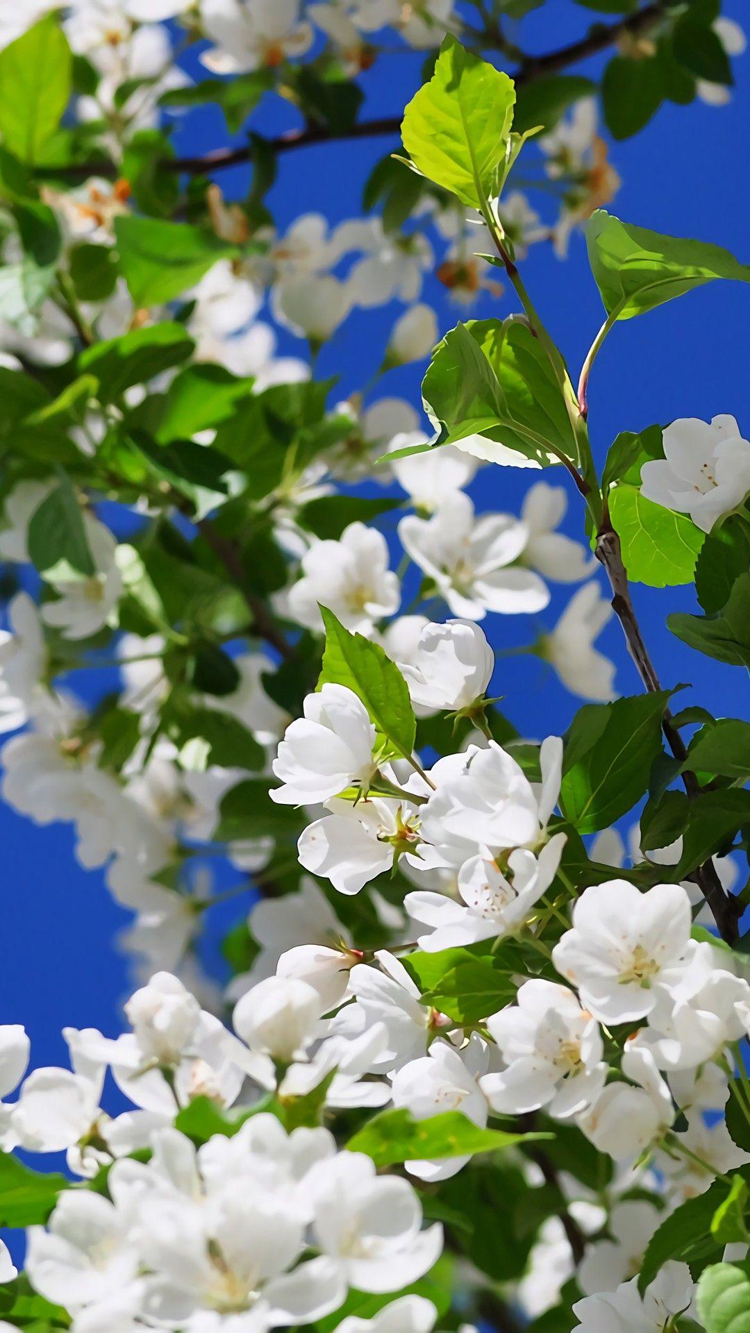 Pin de Jonel en my garden natures flowers world