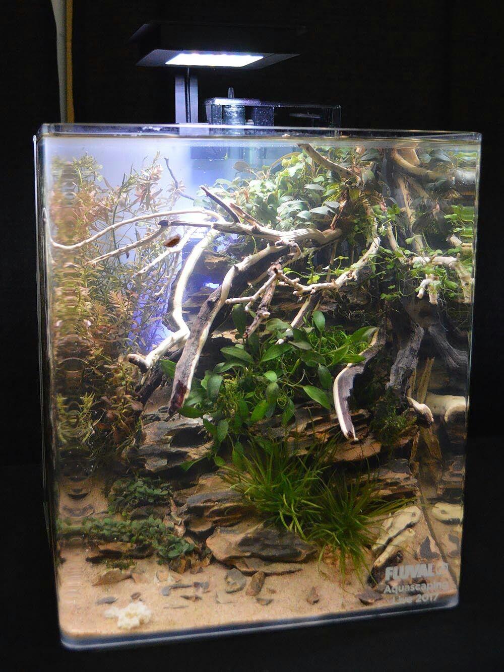Pin od daria k na akwarium pinterest aquarium freshwater