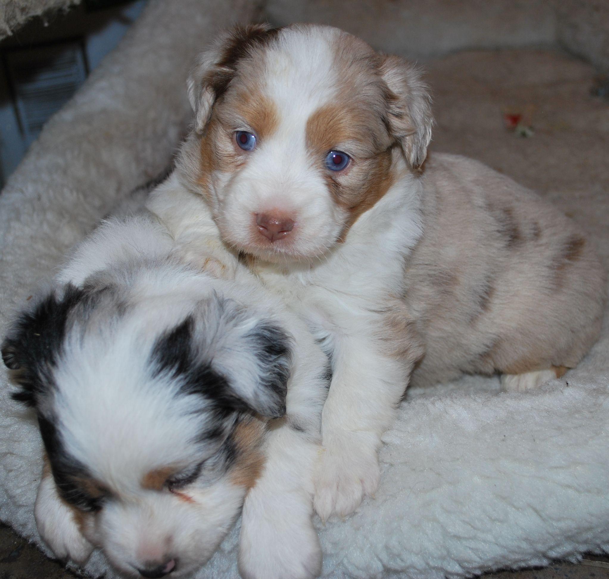 NachoPuppiesJan2011 Cute puppies, Puppies, Dogs