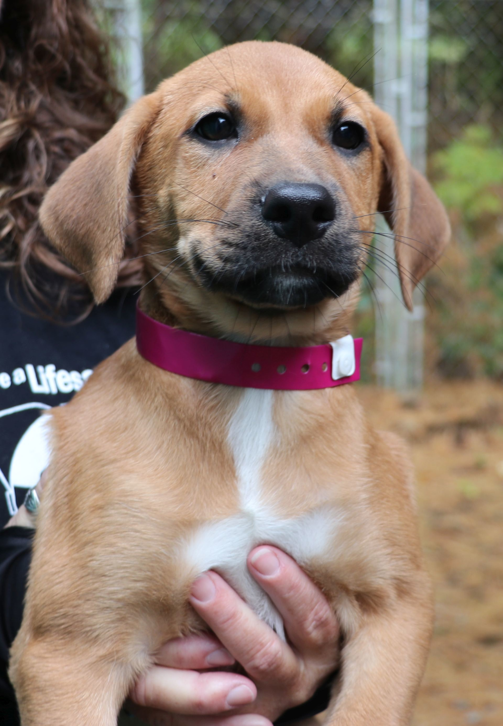 Ct Riley Avail Oct 23 Is An Adoptable Dog Mountain Cur Shepherd Mix Searching For A Forever Family Near Ellington Ct Use Petfinder To Fi With Images Dogs Dog Adoption