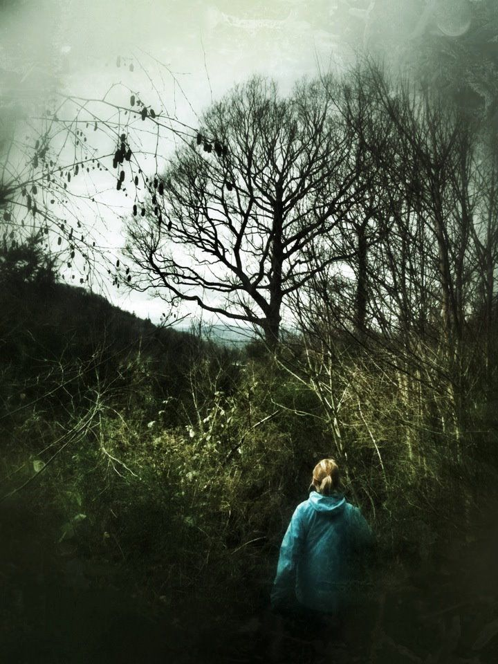A walk in the woods above Ross on Wye, Herefordshire