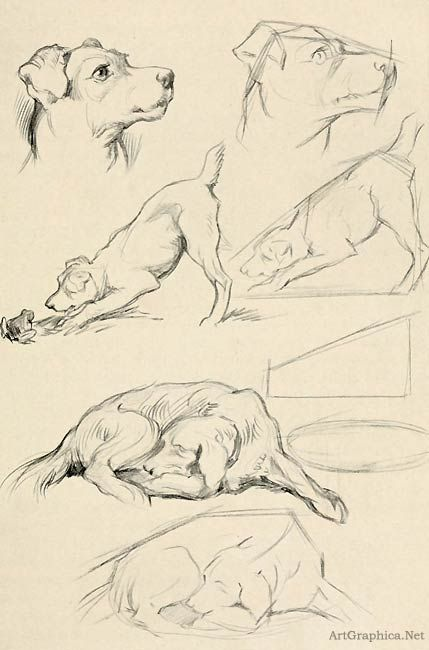 drawing dogs, beginner dog drawing, learning to draw http://www.artgraphica.net/free-art-lessons/drawing-for-beginners/drawing-an-animal.html