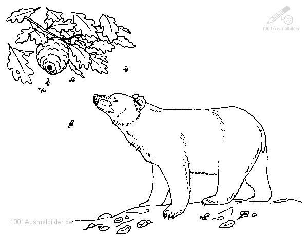 Malvorlage Bar | animal coloring | Pinterest