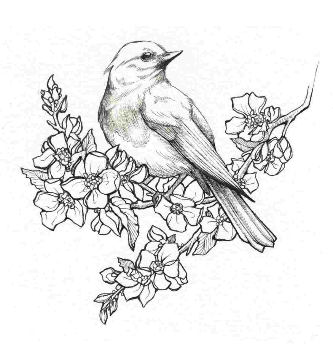 Pencil Drawings Of Flowers And Birds Pencil Drawings Of Flowers Bird Drawings Bird Sketch