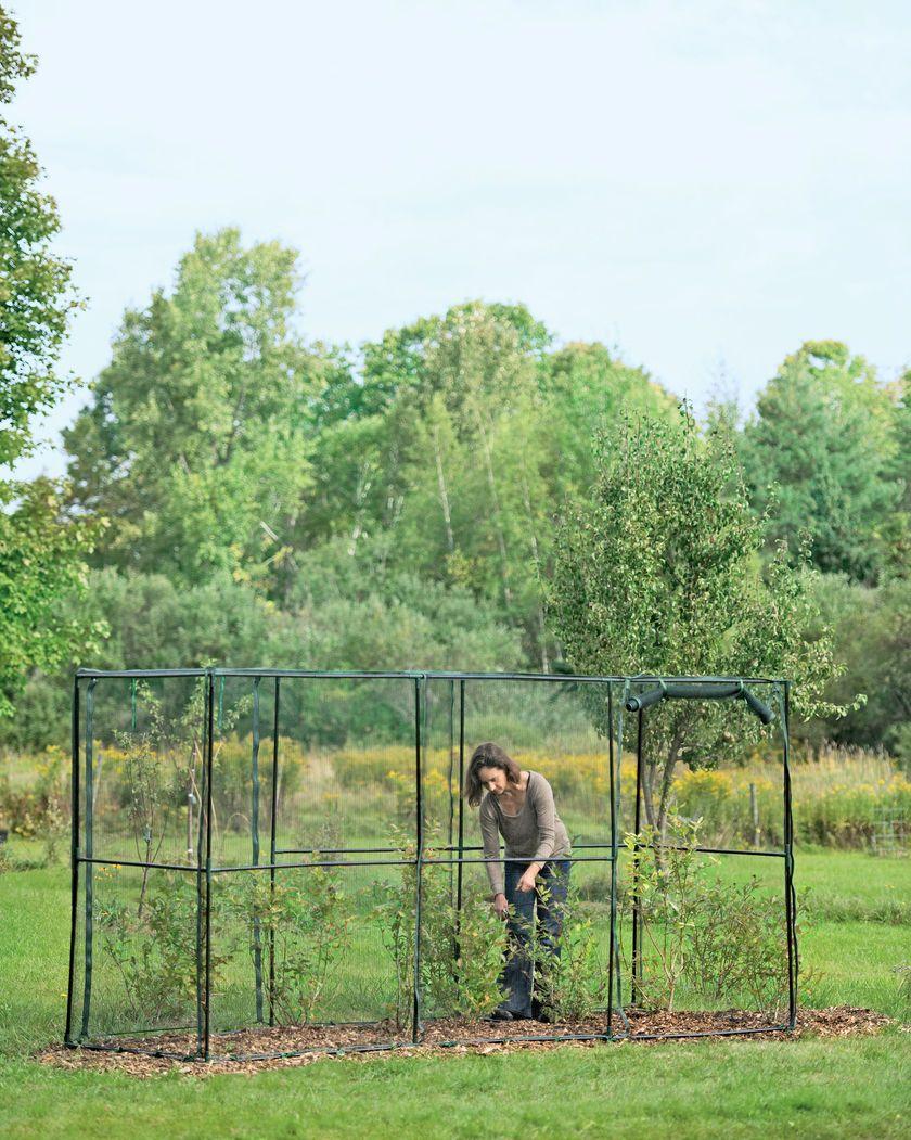 Crop Cage 4 Ft X 12 Ft X 6 Ft Tall Gardener S Supply Garden
