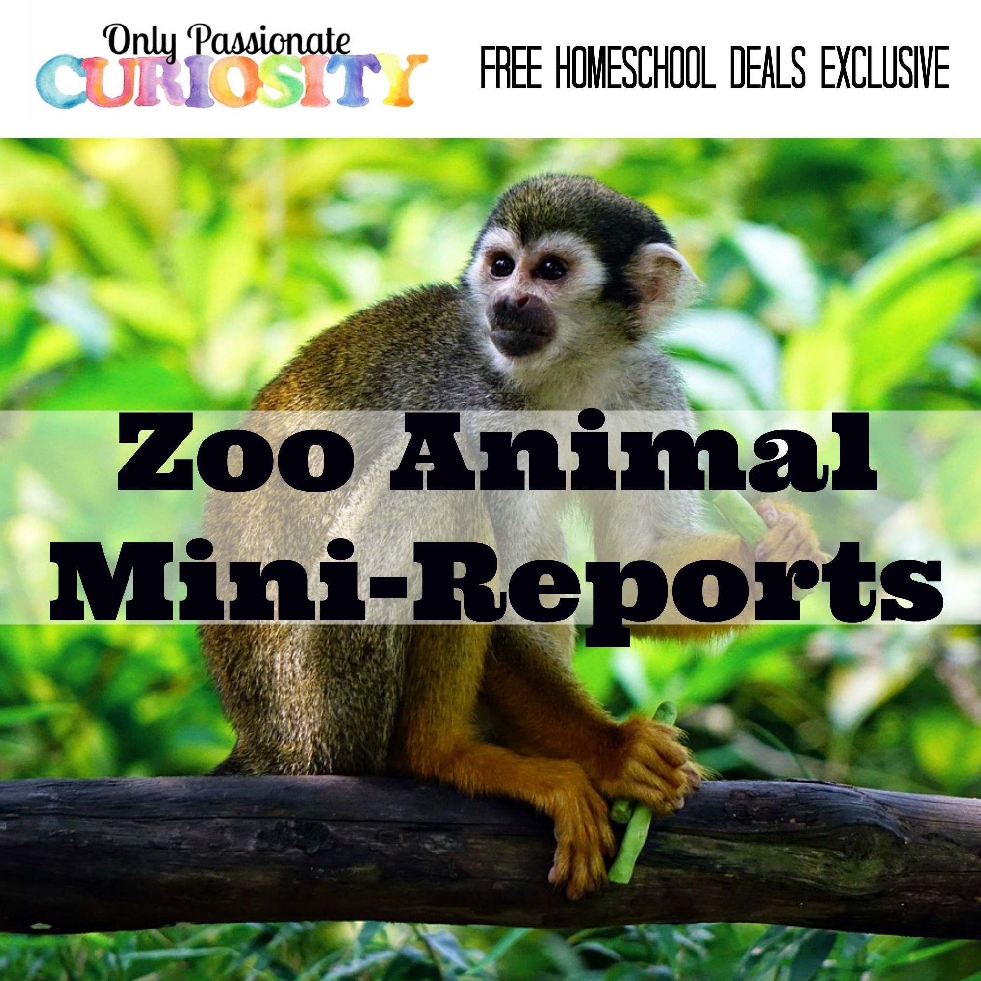 FREE ZOO ANIMAL MINIREPORTS (Instant Download) Ultimate