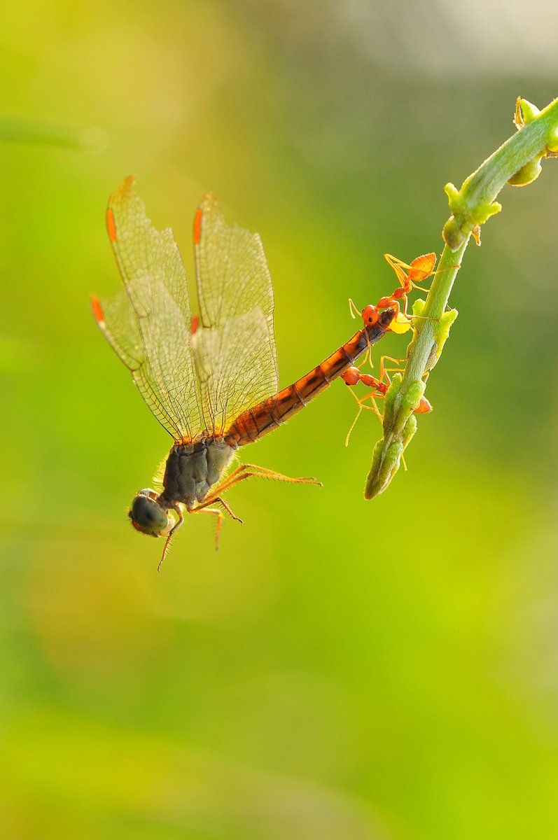 INSECTs » http://Pinterest.com/RamiroMacias/Insects | Dragon Fly ...