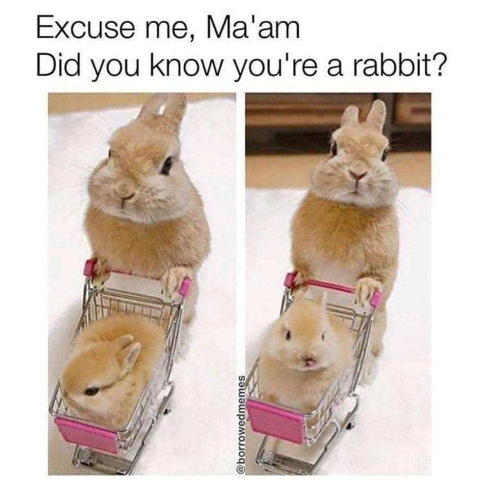 Excuse Me M Am Cute Animals Funny Cat Memes Funny Animal Memes