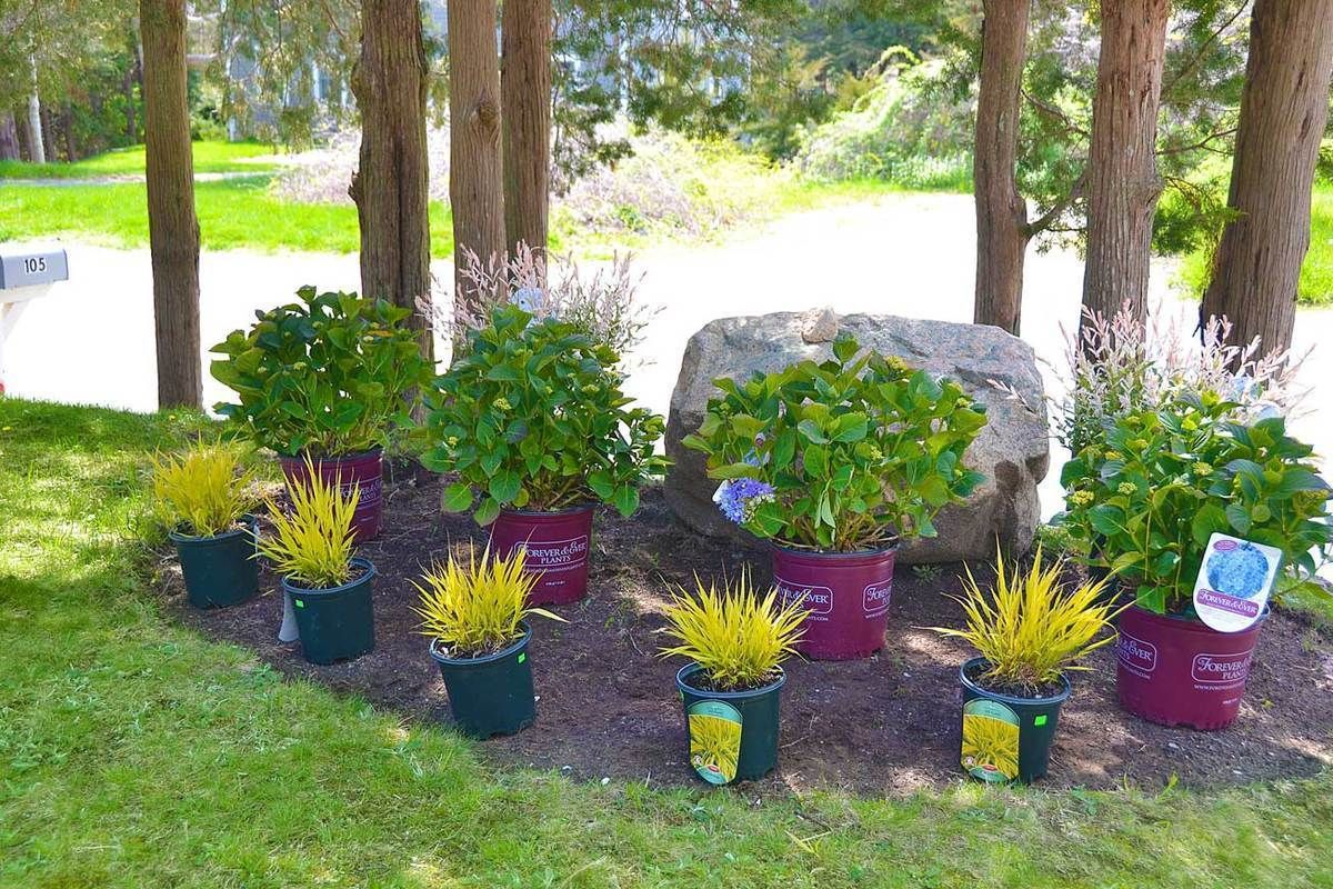 Foundation Plants Shrubs For Front Of The House Curb 400 x 300