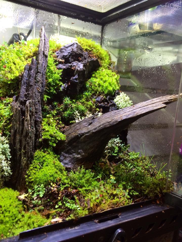 Vivarium Terrariums Aquariums And Paludariums Vivarium