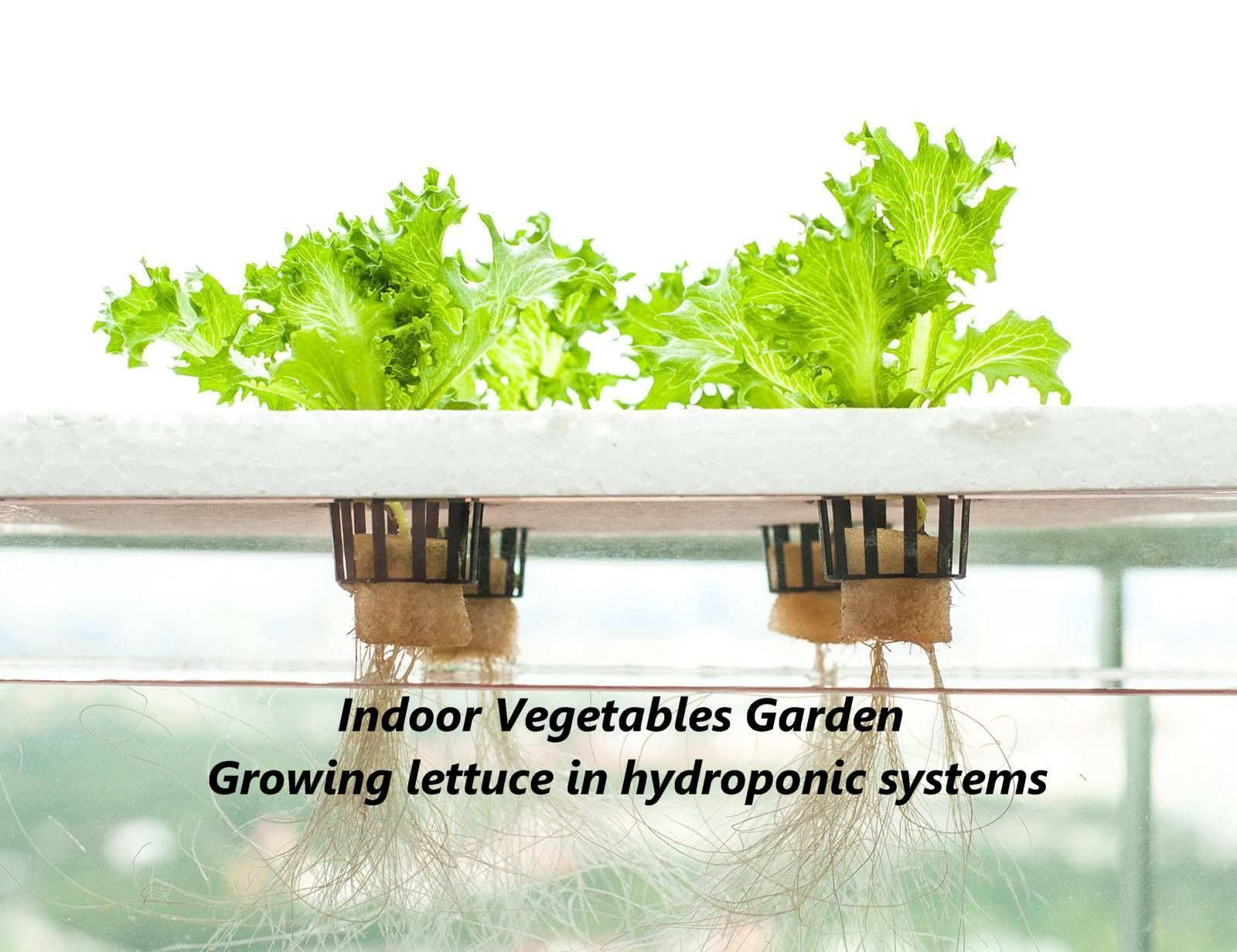 How To Grow Vegetables Indoors Without Soil Hydroponic Farming Hydroponics Aquaponics