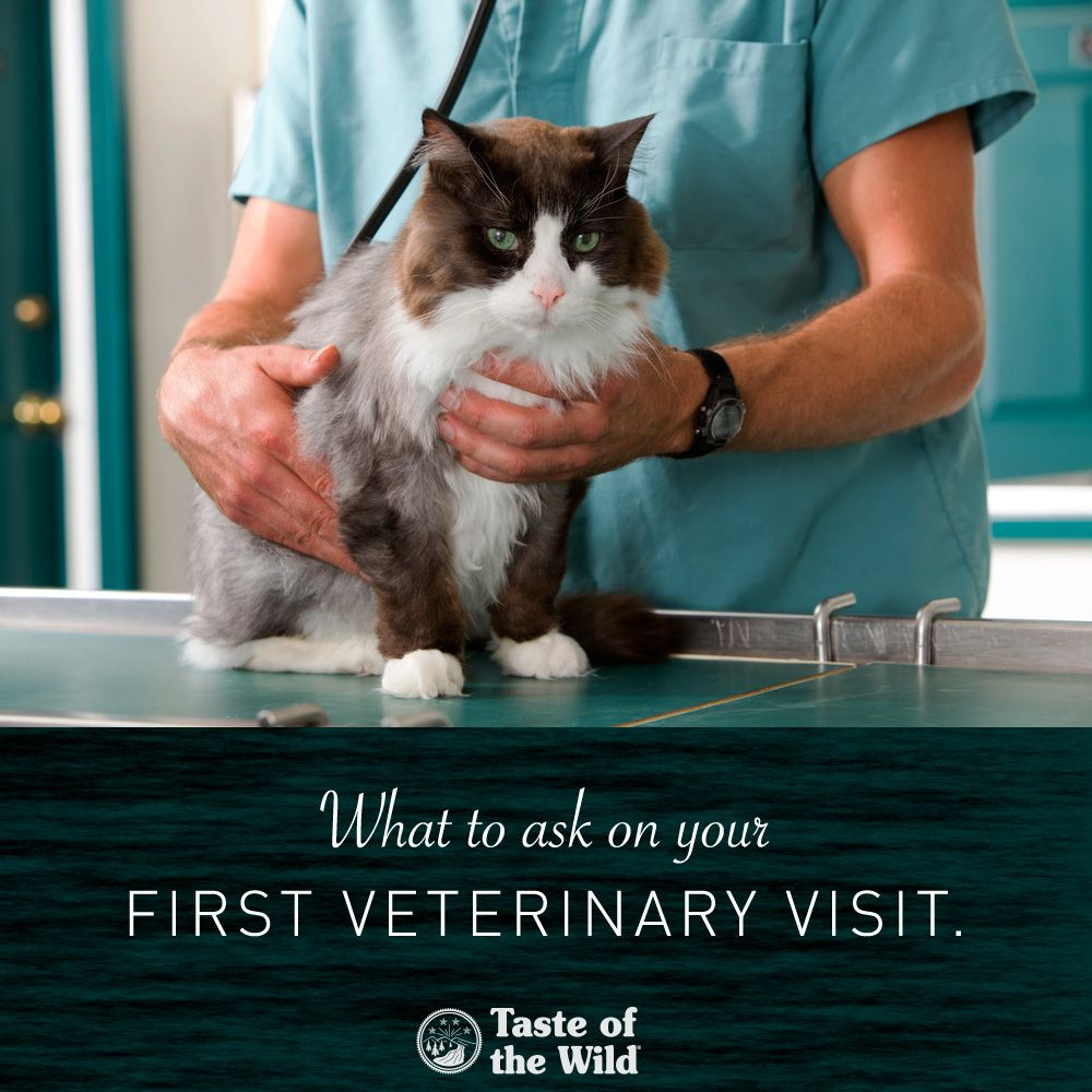 8 Things To Ask Your Vet On Your First Veterinary Visit Cats Heartworm Kitten Love