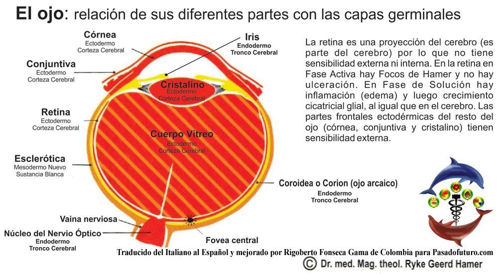Vistoso Nervios En El Ojo Friso - Anatomía de Las ...