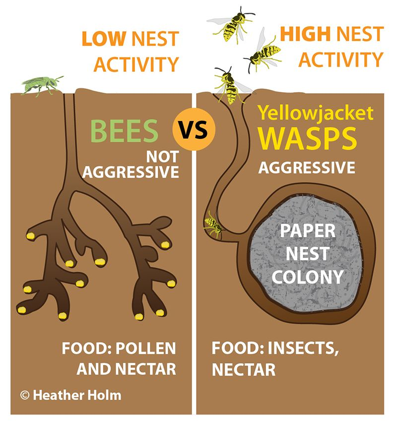 Why You Should Let Ground Nesting Bees Nest In Your Garden