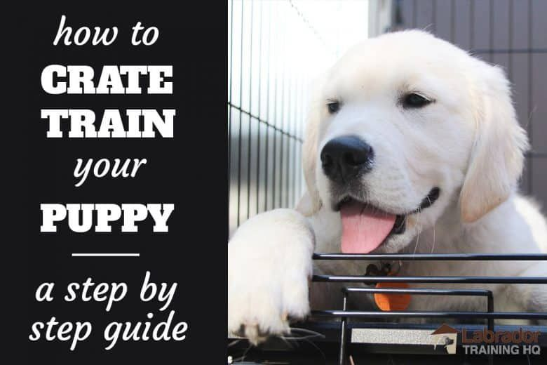 How To Crate Train A Puppy: Day, Night, Even If You Work (2020)