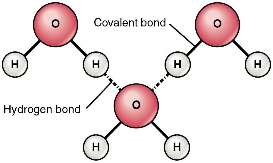 Chemical Bonds Anatomy Physiology Covalent Bonding Water Molecule Chemistry