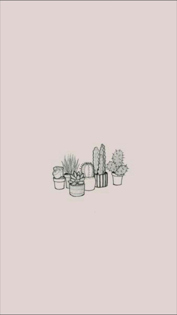 Cactus Fond Rose Pale Cute Simple Wallpapers Thought Wallpaper