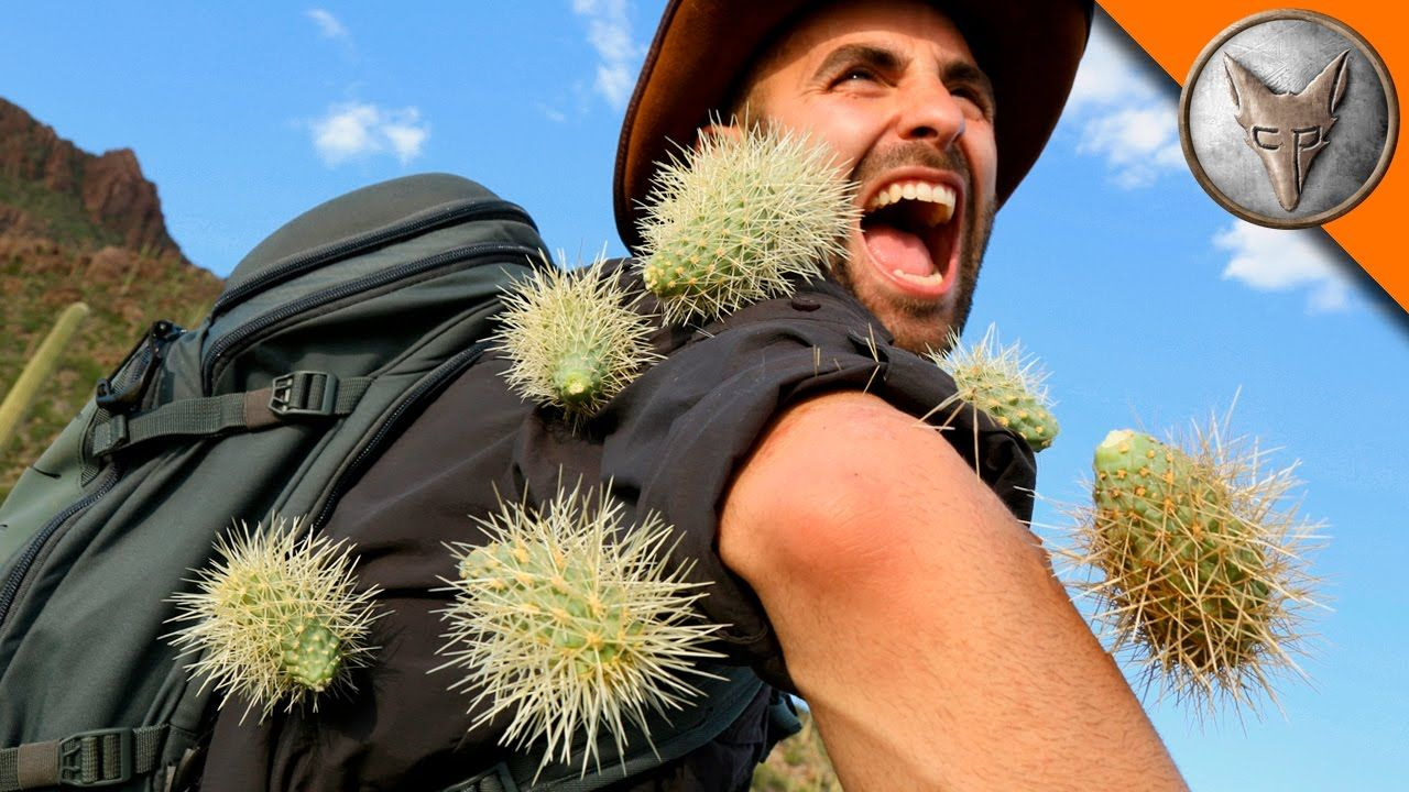 Coyote Peterson Gets Attacked By Jumping Cacti While