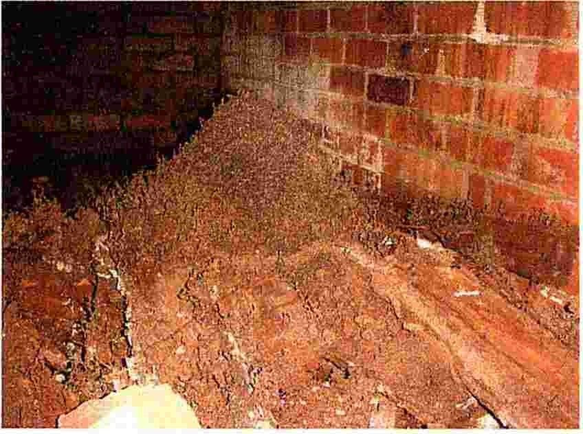 does nrma house insurance cover termites