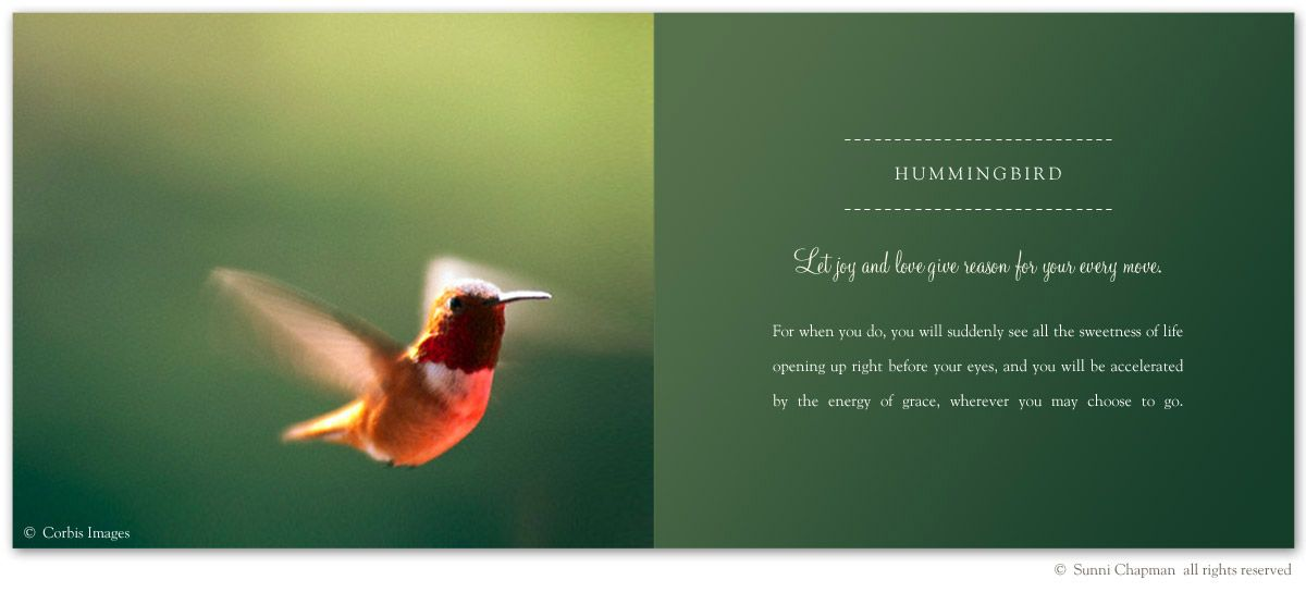 Hummingbird Symbolism Excerpt From The Book Letters From Earth By