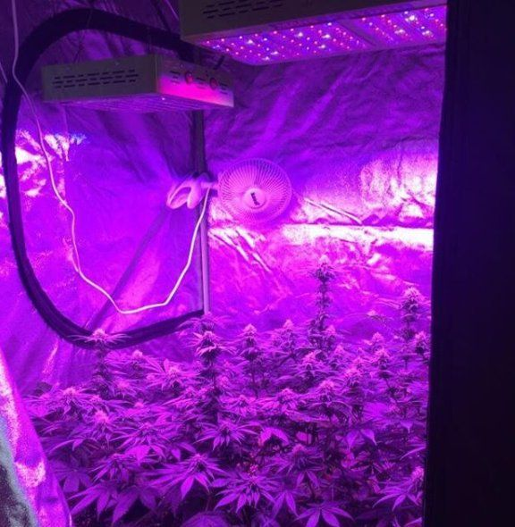 240 Watt With 480 Watt Marshydro Reflector Led Grow Lights 400 x 300