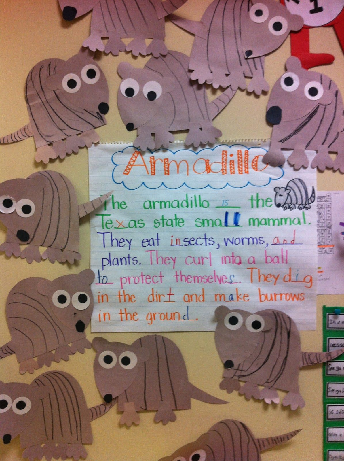 Armadillos With Images