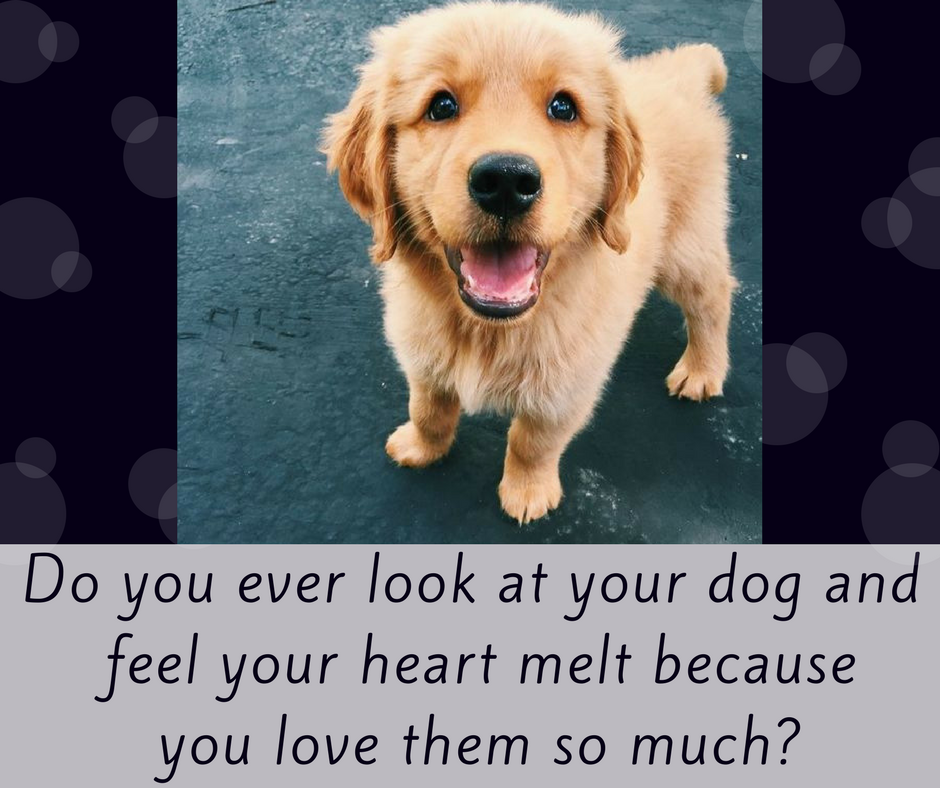 Have You Ever Felt That Petsworld Dogs Dogsofinstagram Puppy Puppylove Cute Dogs Pets Dogs