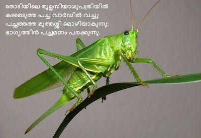 ക ണ ത പ യ കവ തകൾ Lost Poems Malayalam Kavithakal Grasshopper Grasshopper Pictures Grasshopper Images