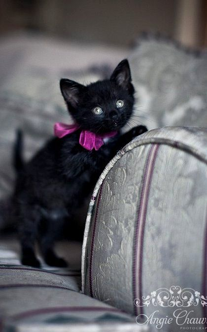 Sweet little glamour puss ♥