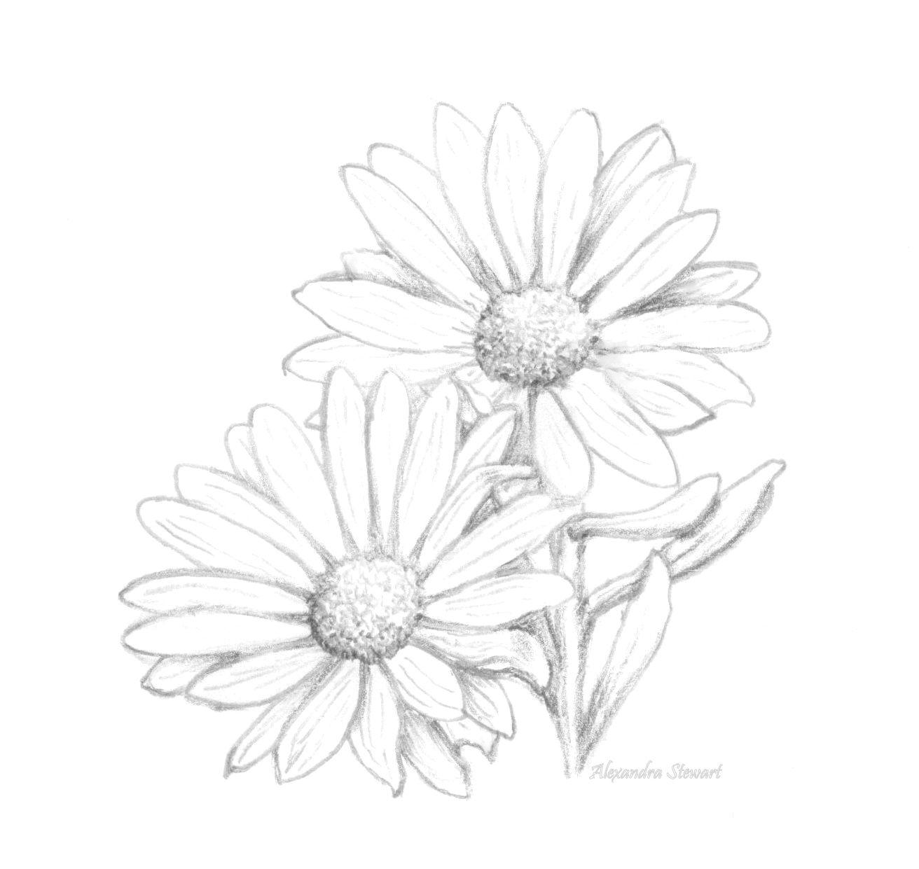 resultado de imagem para daisy flower drawing drawing