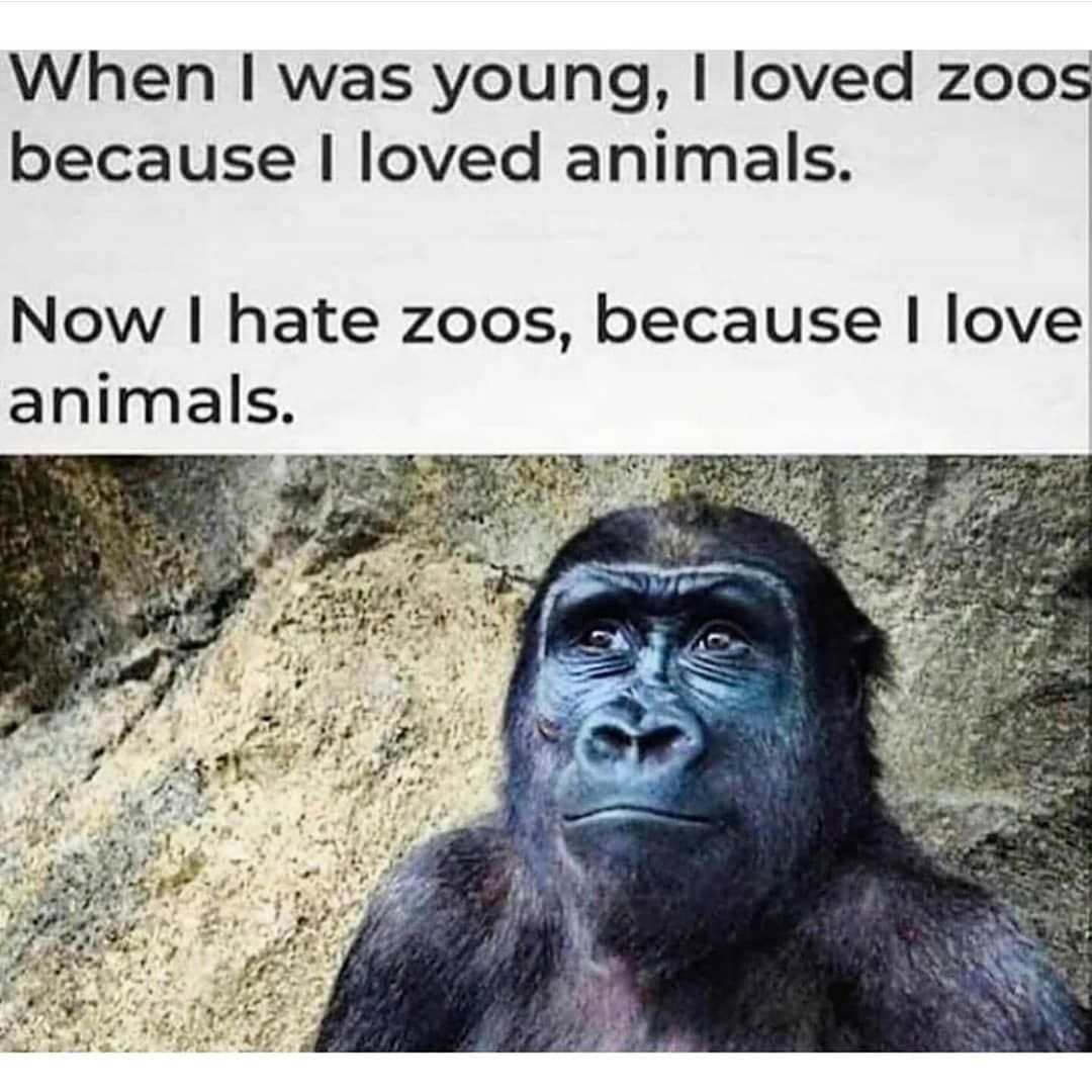Hollistic Vegan On Instagram How Do You Feel About Zoos If You Are An Animal Lover Fol Animal Lover Quotes Animal Rights Quotes Animal Activism