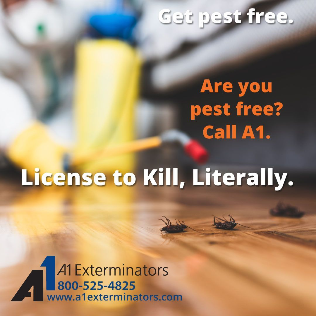 Pin On Bug Pest Control Tips