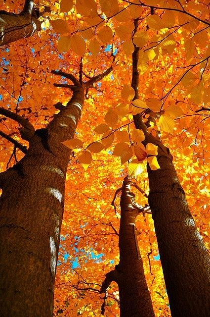 Looking up to the splendor of Fall