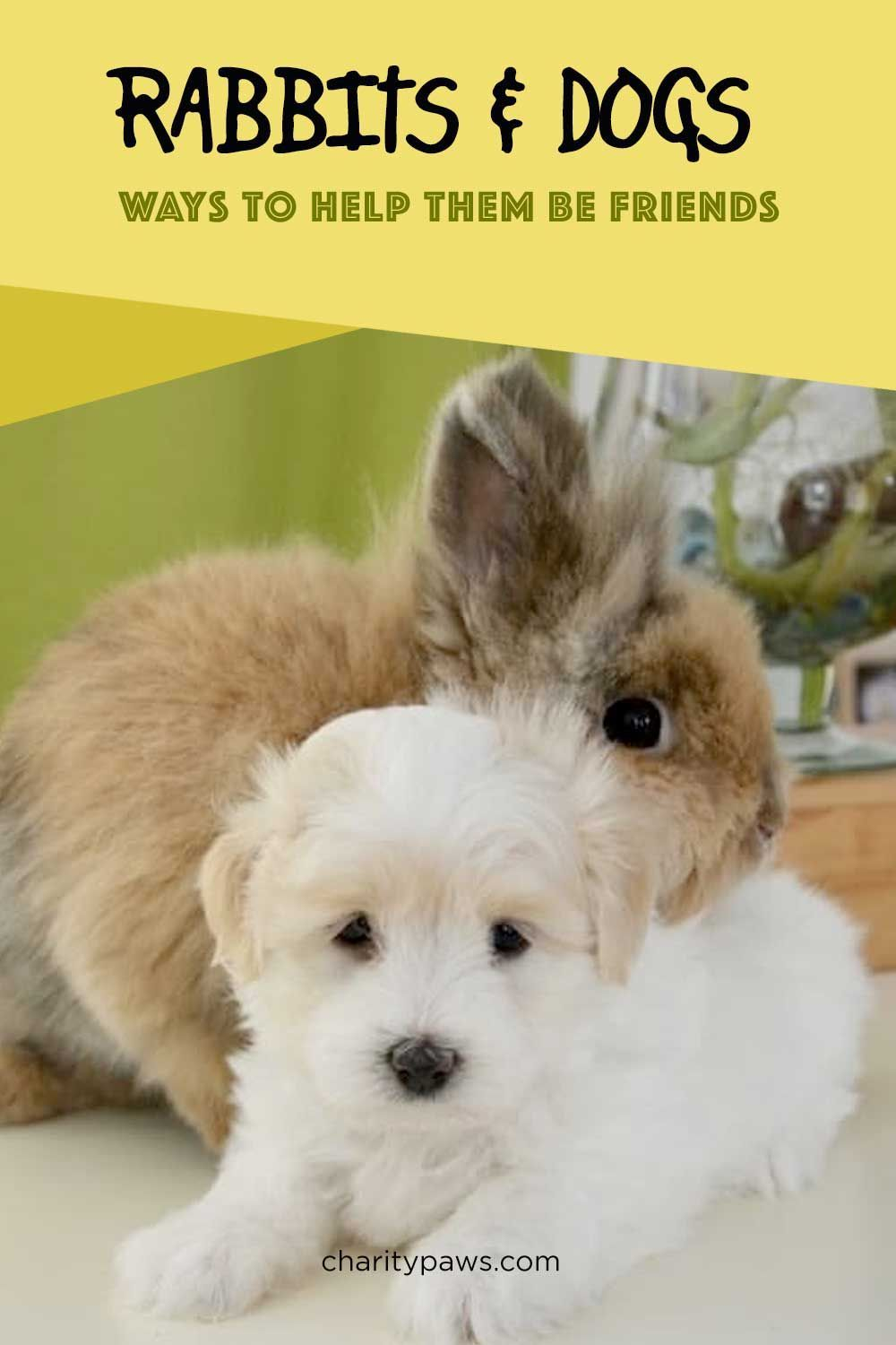 Do rabbits and dogs get along in 2020 dogs cute