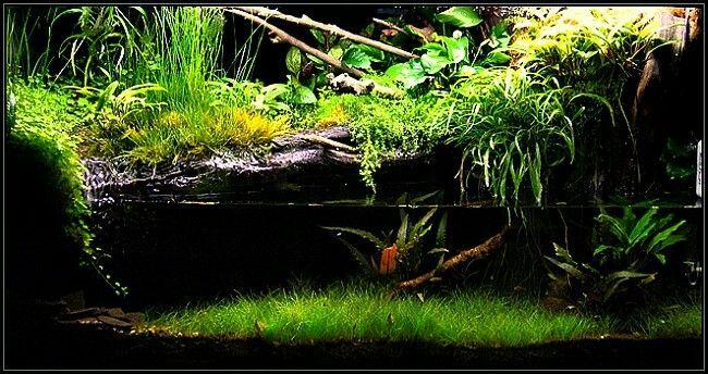 Paludarium Aquarium Terrarium Aquarium Aquascape Aquarium Freshwater Aquarium