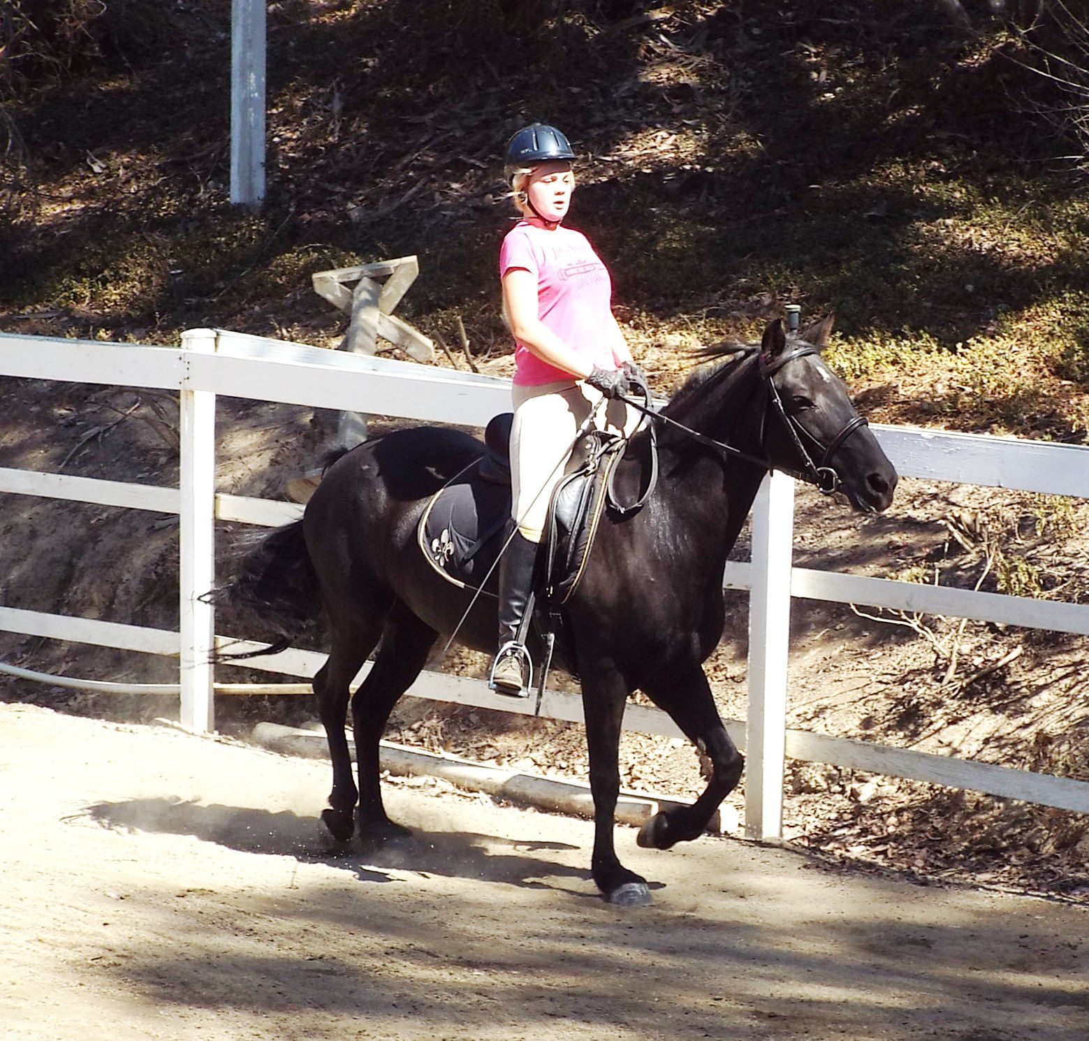 5 essay writers win free horse-riding lessons from Apache Junction Mounted Rangers