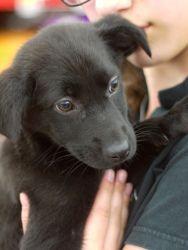 Puppy Ari @ Mutt Love Rescue