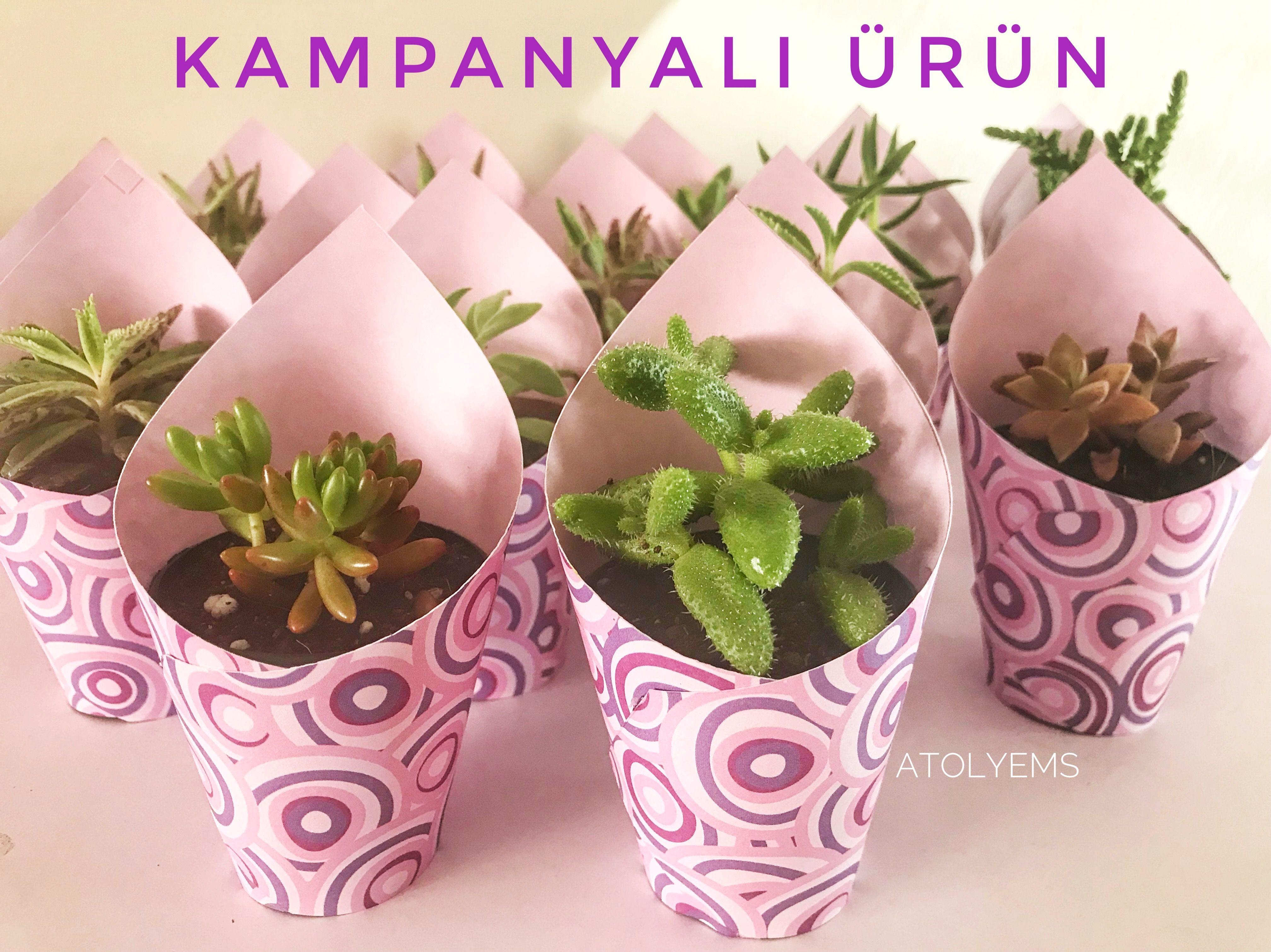 minisukulent #wedding #minisucculent #cactus #elişi #weddingfavors ...