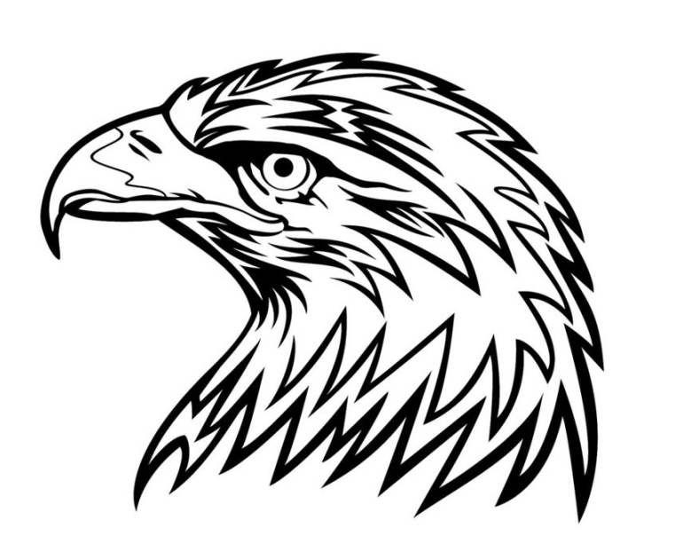 Adler Malvorlage Tattoooooos Adler Zeichnung