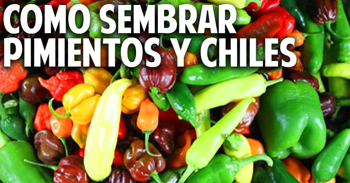 Cosas del jardin como germinar semillas de chile - Cosas del jardin ...