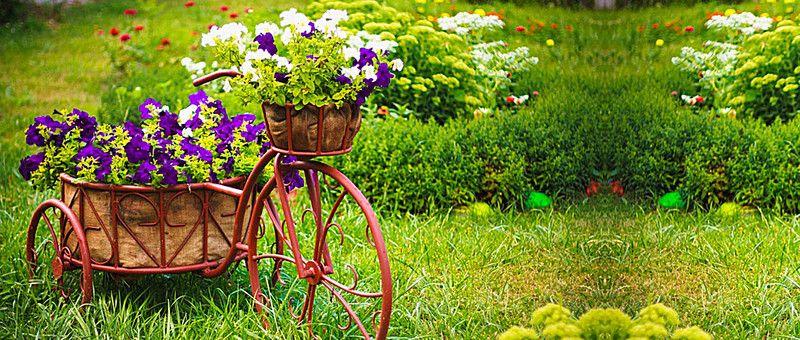 Nature Garden Flower Background Garden Design Garden Gifts Amazing Gardens